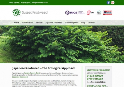 Sussex Knotweed